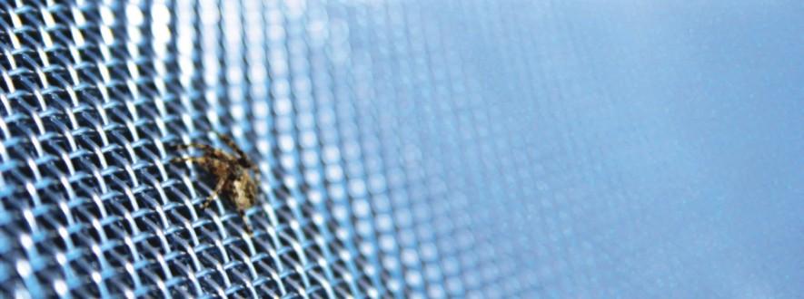 Fliegengitter Magdeburg sind Grundlage für den effektiven Insektenschutz