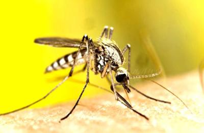 Insektenschutz Magdeburg sorgt mit hochwertigen Fliegengittern für langanhaltenden Schutz