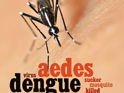 Was schützt vor Krankheiten durch Insekten? Insektenschutz und Fliegengitter Magdeburg ...