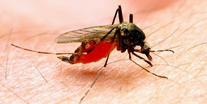 Insektenschutz und Fliegengitter aus Magdeburg schützen Ihr Haus vor Insekten und somit vor Krankheiten durch Insekten