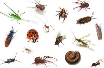 Lästige Insekten können nicht ins Haus mit Fliegengittern von Insektenschutz Magdeburg
